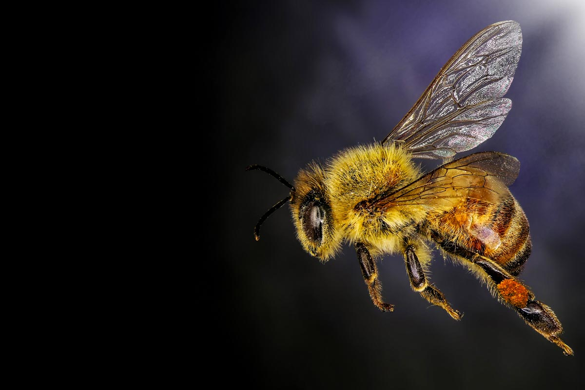 bee venom fight cancer