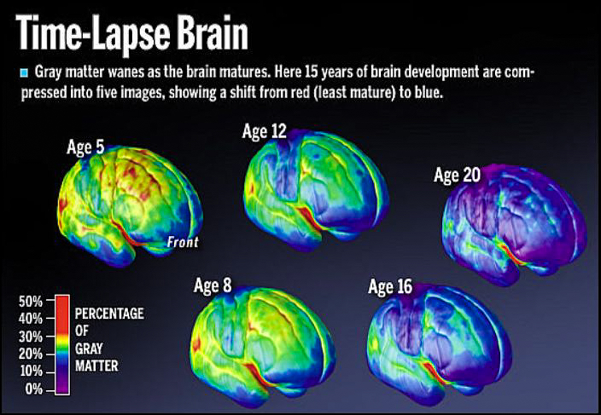 adolescence brain development Dynamic changes in neurochemistry, fiber architecture, and tissue composition occur in the adolescent brain the course of these maturational processes is.