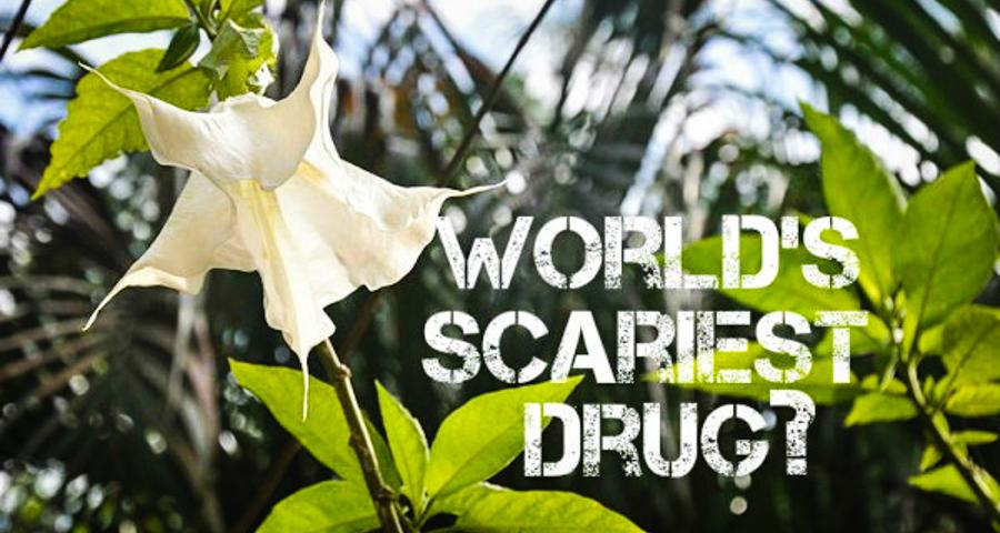 1_world's dangerous drug