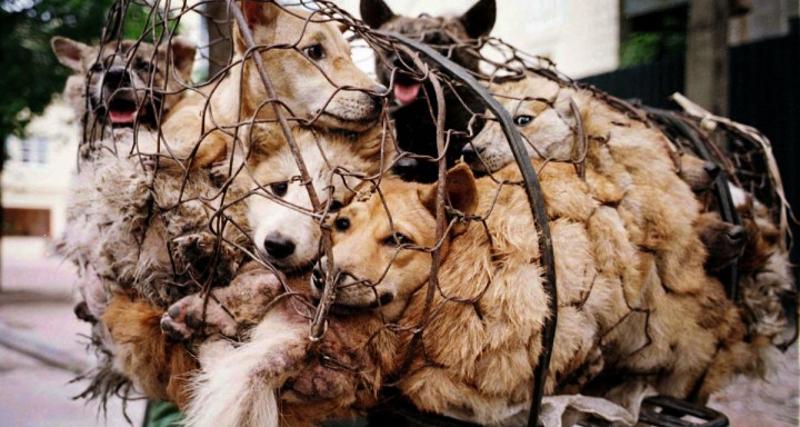 7_Yulin Dog Meat Festival