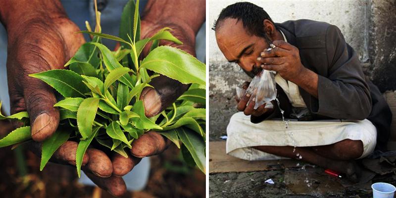 1_plant draining Yemen economy