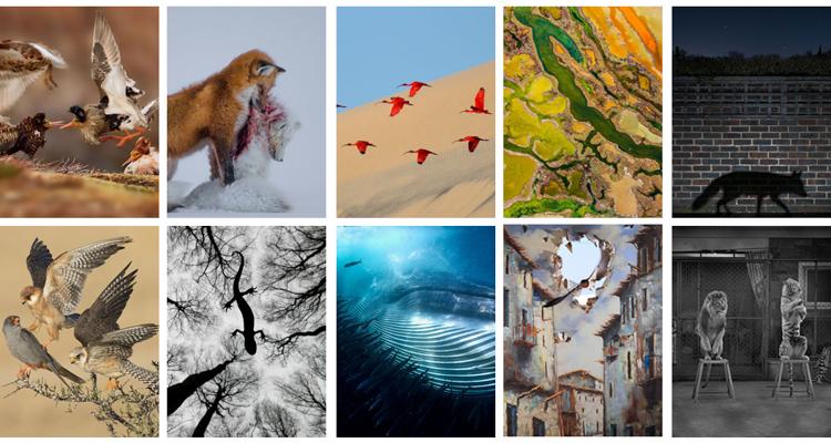 1_2015 Wildlife Photography winners