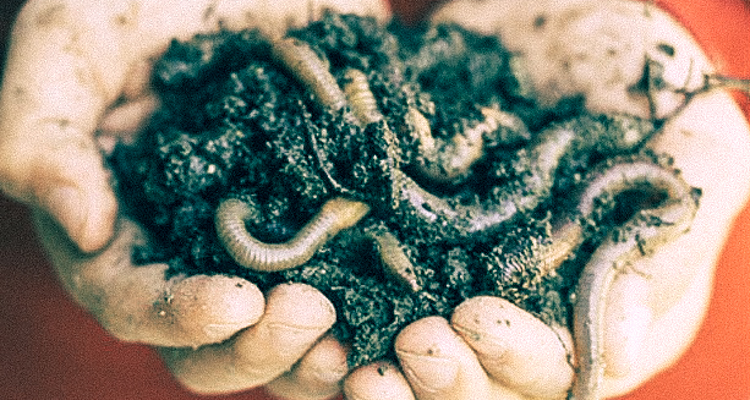 1_earthworms fight climate change