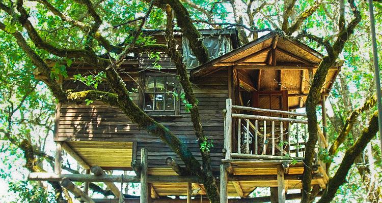 1_treehouse lifestyle