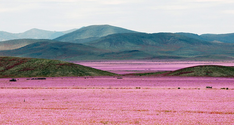 0_The driest desert on earth