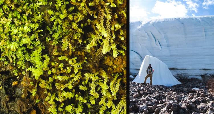 1_Arctic zombie plants
