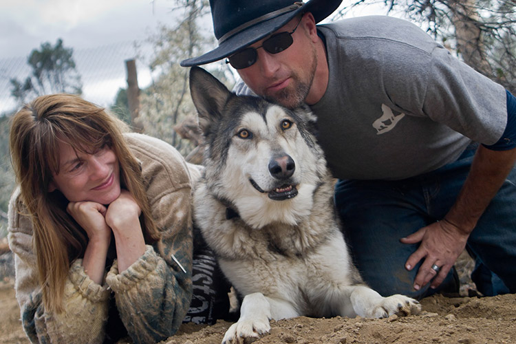 Veterans Experiencing Ptsd Are Healing With The Help Of Wolves