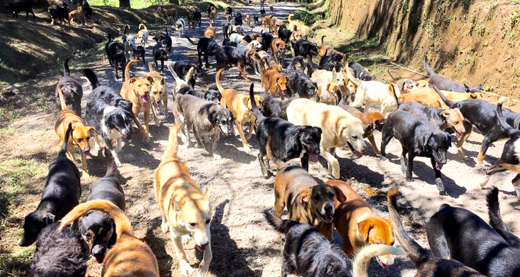 1_Costa Rica's Land of the Stray Dogs