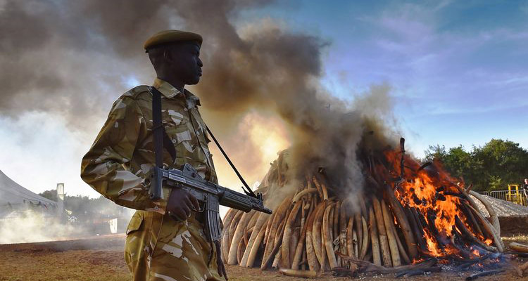 1_Kenya burning ivory