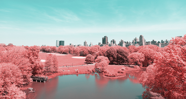0_Central Park Infrared