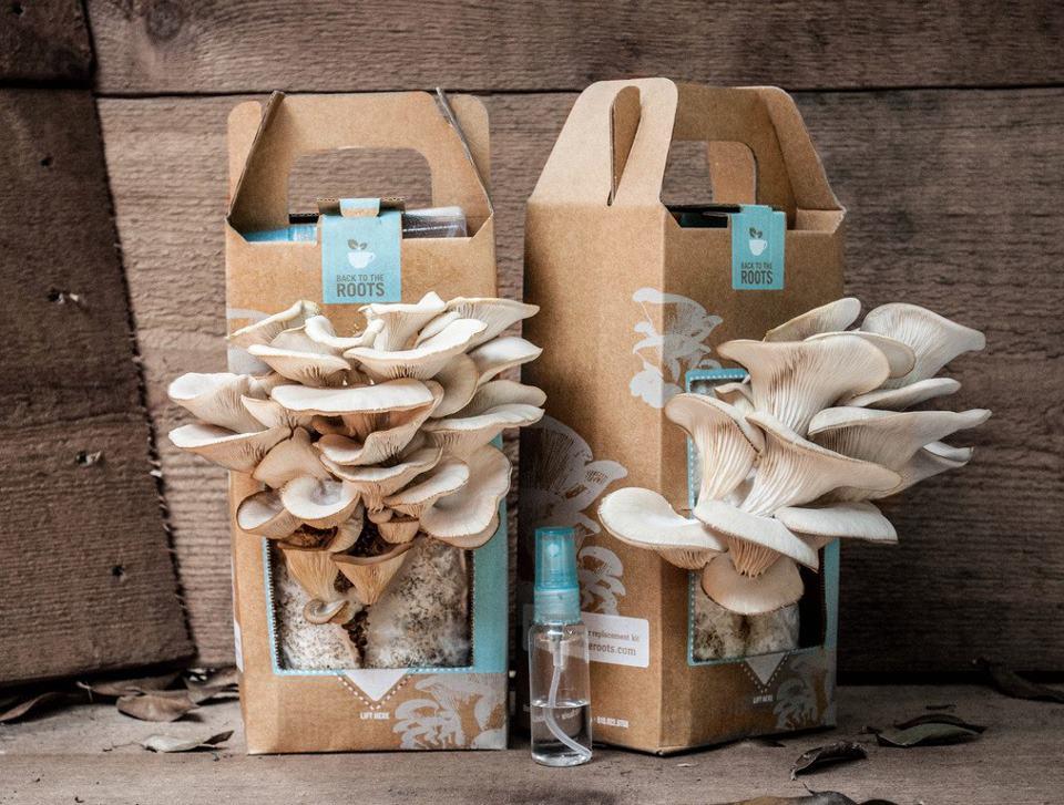 growing-mushrooms-in-coffee-grounds_2