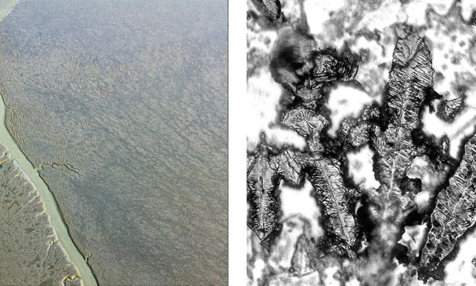 5_Aerial and microscopic photos