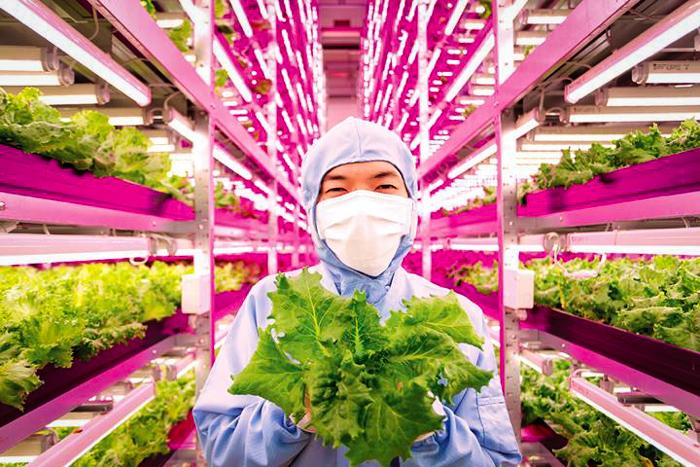 indoor farms_Altnernative News