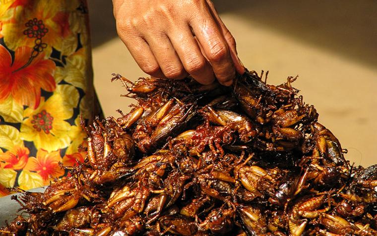 1_cricket meat