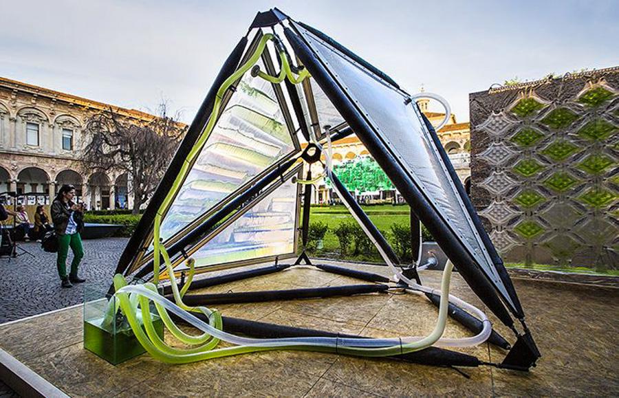 1_urban algae canopy