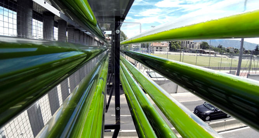 Urban Algae Farm Eats Highway Pollution And Turns It Into