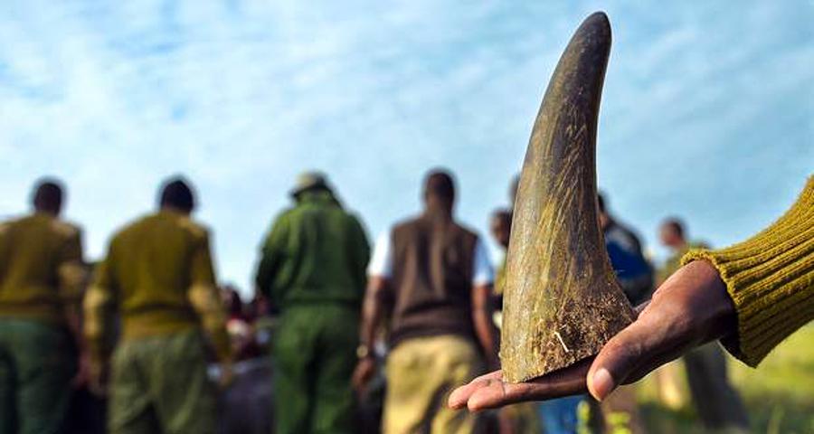 1_fake rhino horns