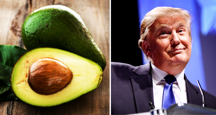 1_Avocado vs donald trump