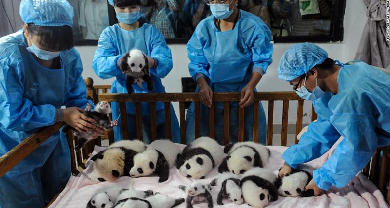 1_panda daycare