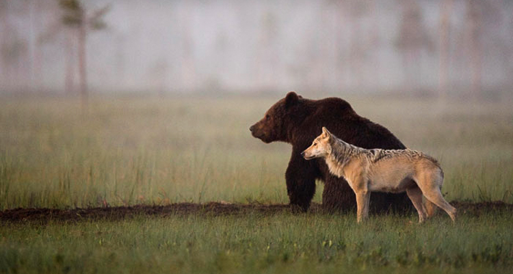 1_bear and a wolf best friends