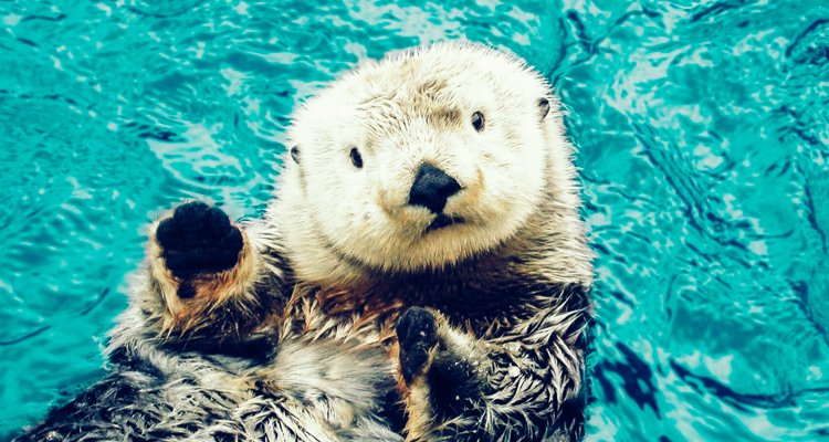 1_otters_lower carbon dioxide