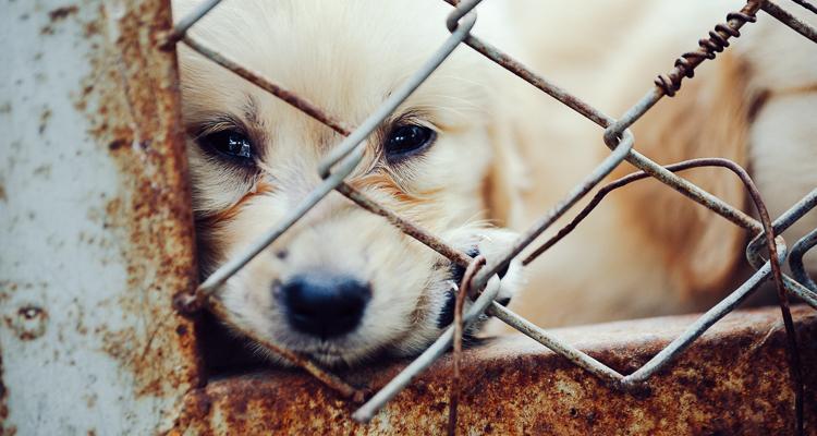 1_Arizona puppy-mill law