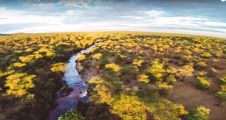 1_Serengeti wildlife drone footage