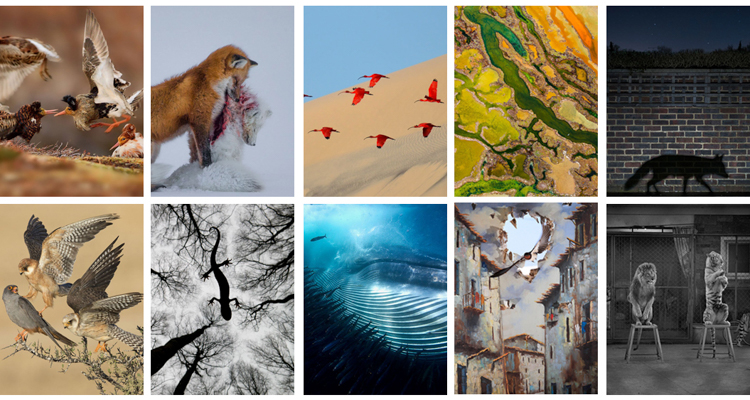 1_2015 Wildlife Photography winners
