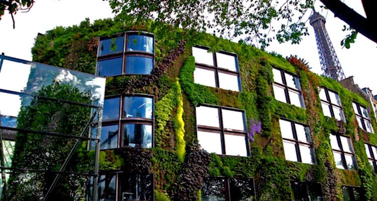 1_Moss growing concrete CO2