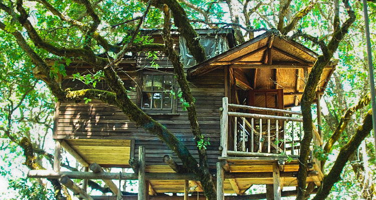 1_treehouse lifestyle