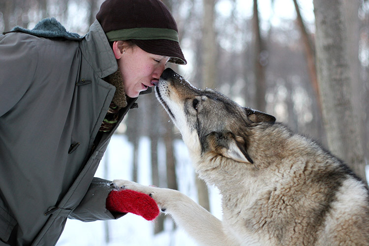 7_cuddle with wolves