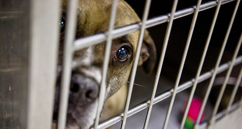 1_Tennessee releasing animal abusers registry