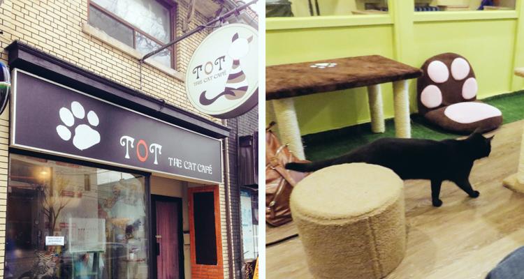 1_Cat Cafes