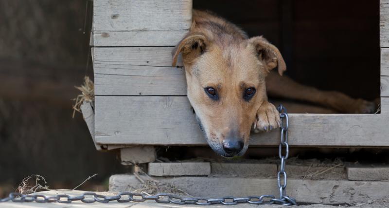 1_animal-abuse-a-felony