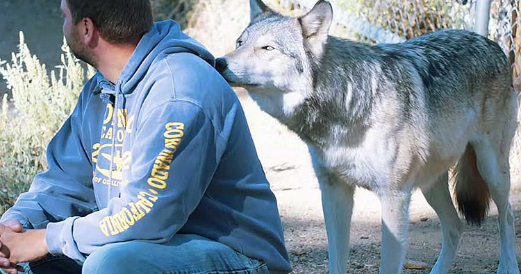 0_Warriors and wolves