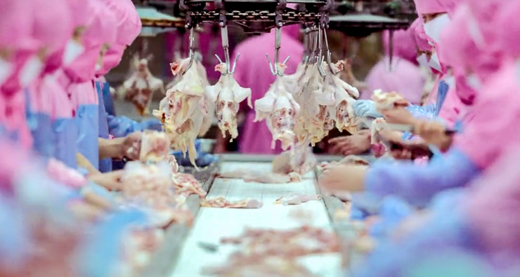 1_Watch how eating meat is destroying our planet