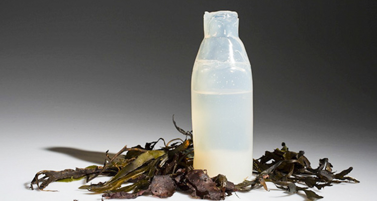 1_Water bottle made from algae