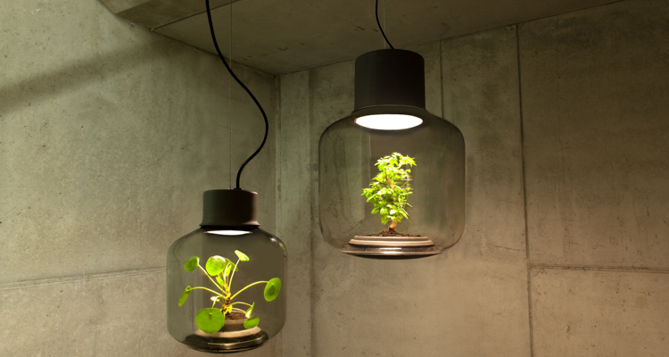 1_glass lamp grows plants in windowless spaces