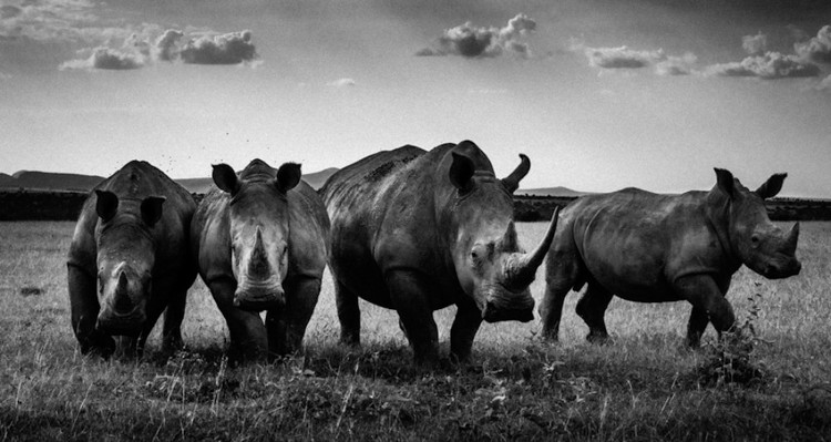 6_Africa's wildlife roaming free