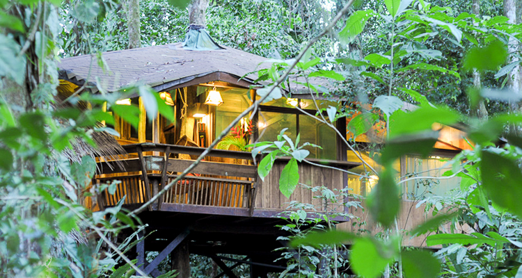 Treehouse hotels article banner image