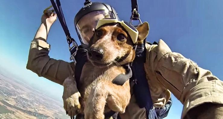 sky-diving dog